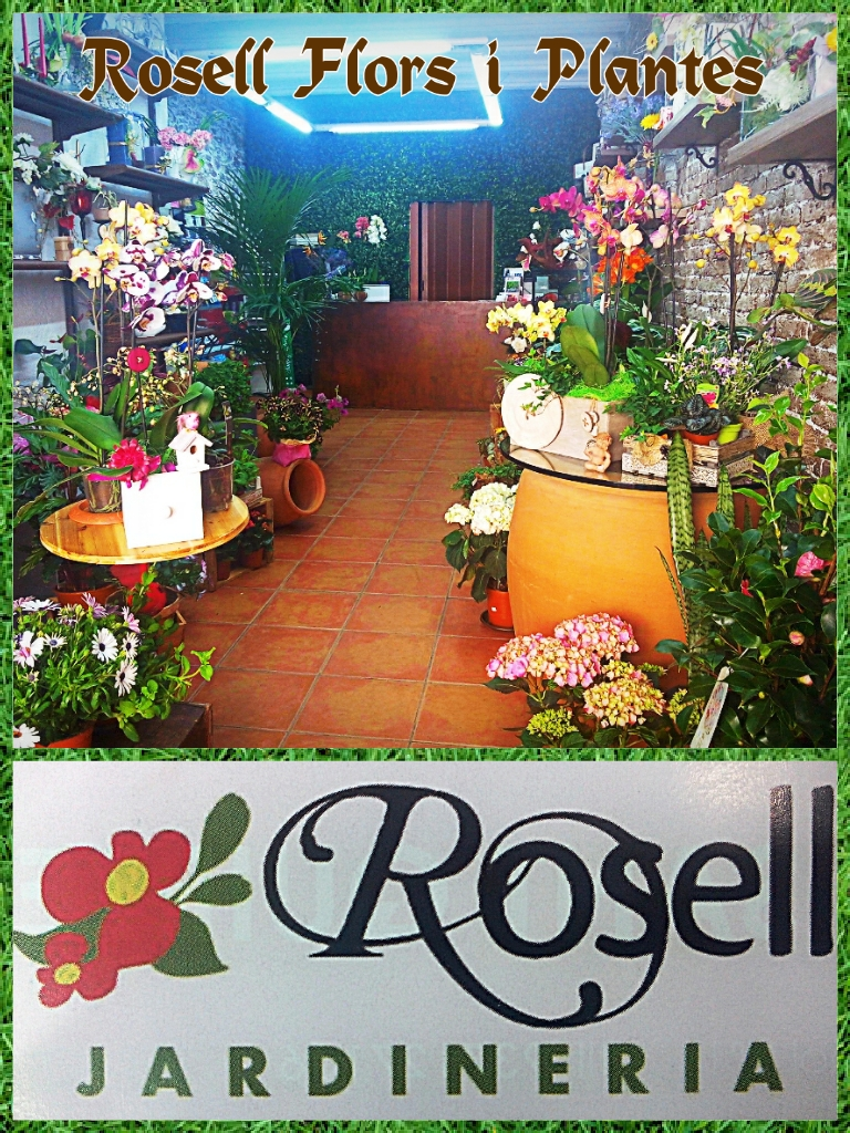 Rosell Flors i Plantes